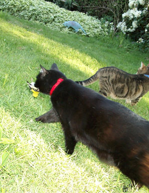 Toto has a goldfinch; Satchel is jealous