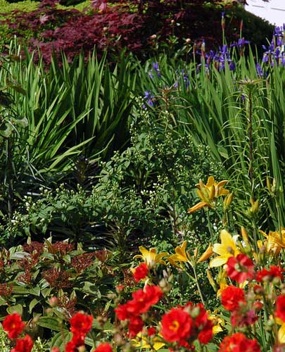 [photo of the front border bed, which is filled with colorful flowers]